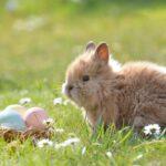 Stammtisch Plastikfreie Ostern